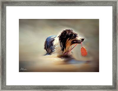 The Bandit Framed Print by Jacque The Muse Photography