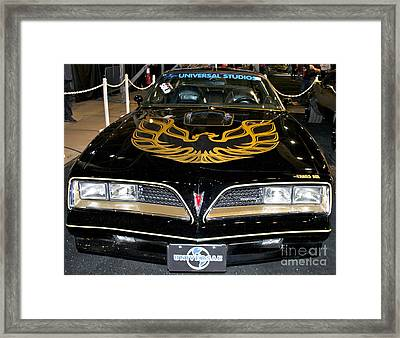 The Bandit Framed Print