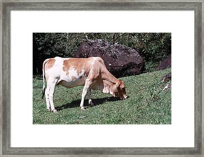 The Banket Of Grass Framed Print by David Cardona