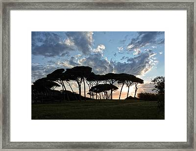 The Baratti Pine Trees Framed Print by Joachim G Pinkawa