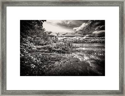 The Basin And Snails Framed Print by Bob Orsillo