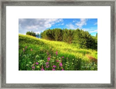 The Beach Meadow Framed Print by Veikko Suikkanen