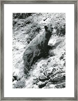 The Bear Framed Print
