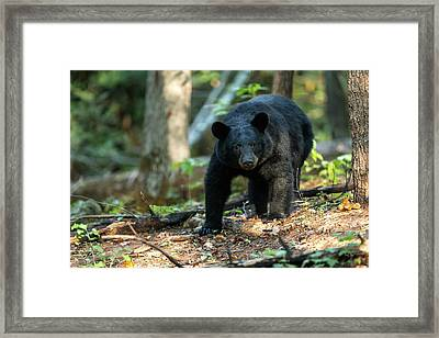 Framed Print featuring the photograph The Bear by Everet Regal