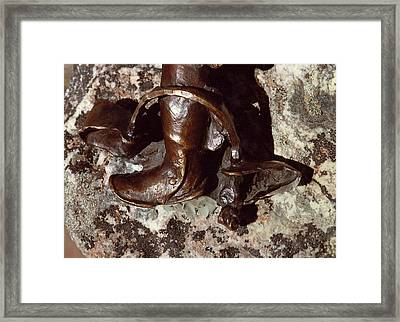 The Bear Trap Detail Framed Print by Willoughby Senior