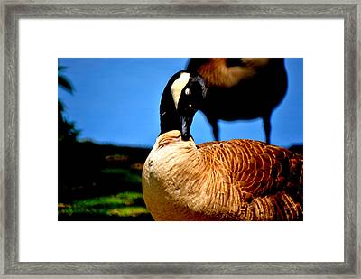 The Beautiful Duck Framed Print by Robert Scauzillo