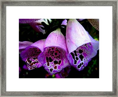 The Beautiful Foxy Framed Print by Shirley Sirois
