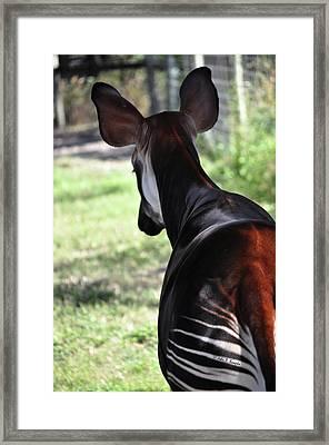 The Beautiful Okapi 02 Framed Print