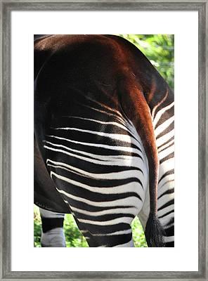 The Beautiful Okapi 03 Framed Print