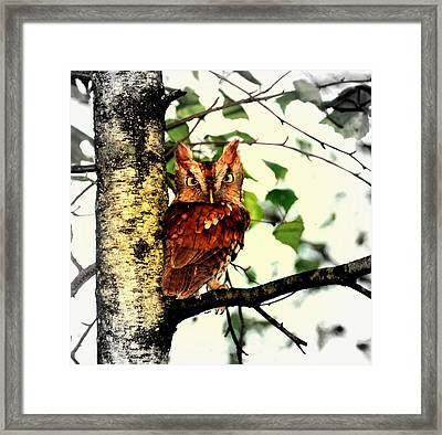 The Beauty Framed Print by Aron Chervin