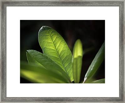 The Beauty Of A Leaf - Framed Print