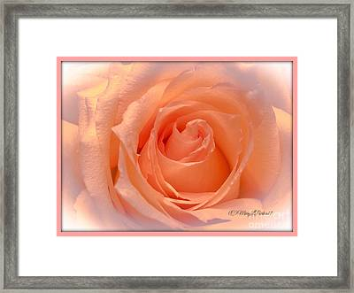 The  Beauty Of A Rose  Copyright Mary Lee Parker 17,  Framed Print