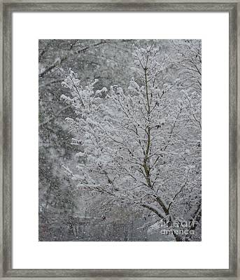 The Beauty Of A Winter's Snow Framed Print