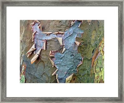 The Beauty Of Bark Framed Print by Jessica Jenney