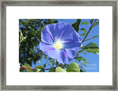 The Beauty Of Blue  Framed Print