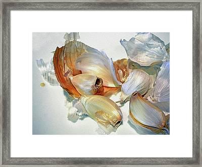 The Beauty Of Garlic Framed Print