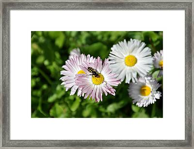 The Beauty Of Nature Framed Print by Luiza W