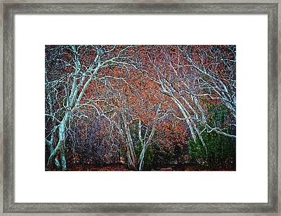 The Beauty Of Nature's Chaos At  Red Rock Crossing, Sedona, Arizona Framed Print by Flying Z Photography By Zayne Diamond