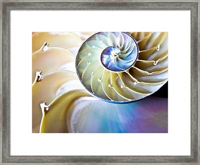 The Beauty Of Nautilus Framed Print