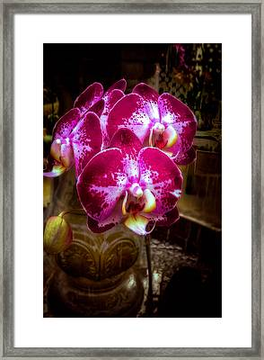 The Beauty Of Orchids Framed Print by Julie Palencia