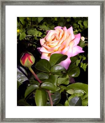 The Beauty Of Peace Framed Print