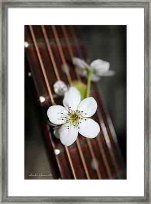 The Beauty Of Strings Framed Print by Linda Sannuti