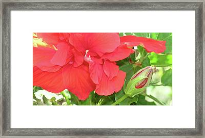 The Beauty Of Summer Framed Print