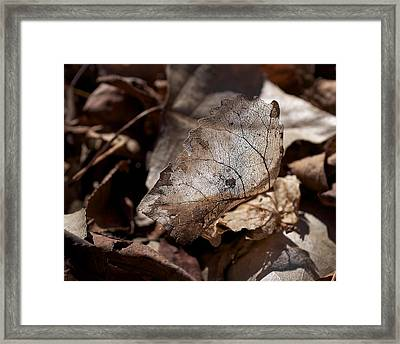 Framed Print featuring the photograph The Beauty Of The End by Rona Black