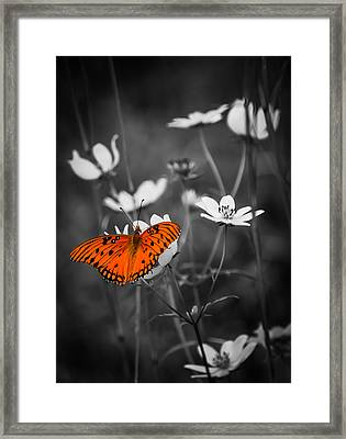 The Beauty Of The Monarch Framed Print