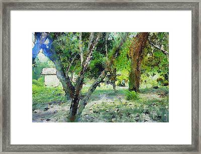 The Beauty Of Trees Framed Print