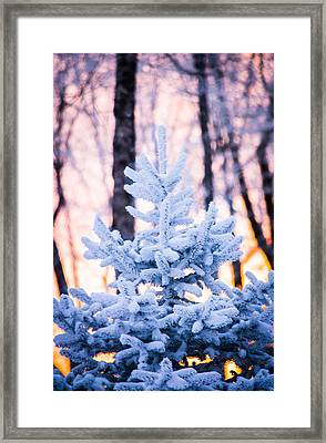 The Beauty Of Winter Framed Print by Shelby Young