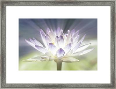 The Beauty Within Framed Print