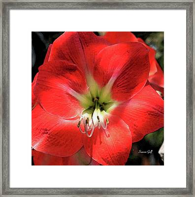 The Beauty Within Framed Print by Suzanne Gaff
