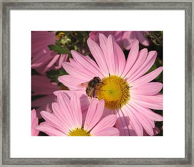The Bee  Framed Print by Lyle Crump