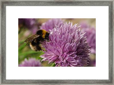 The Bees Are Back In Town II Framed Print