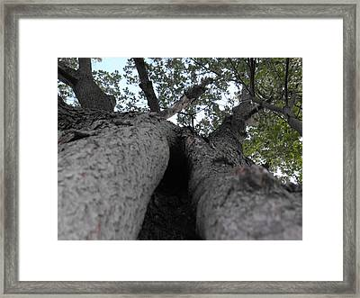 The Bees Moved Out Framed Print