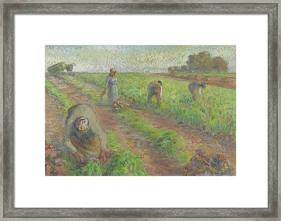 The Beet Harvest Framed Print by Camille Pissarro