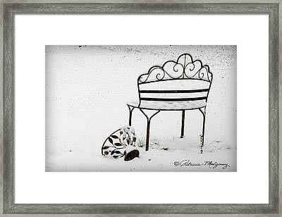 The Bench Framed Print
