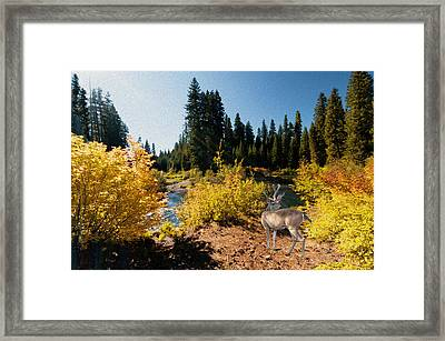 Framed Print featuring the photograph The Bend Of The Rogue River by Diane Schuster