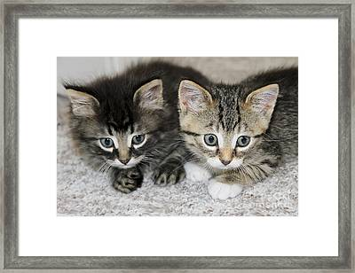 The Best Buddies Framed Print by Teresa Zieba