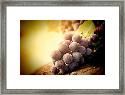 The Best Of The Best Framed Print by VRL Art