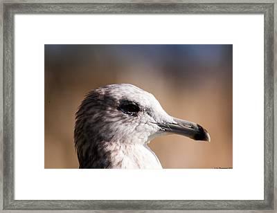 The Best Side Of The Gull Framed Print