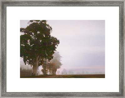 The Big Eucalyptus Framed Print