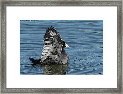 Framed Print featuring the photograph The Big Flap by Fraida Gutovich