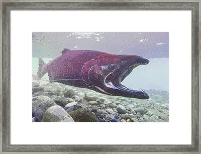 The Big Gulp Framed Print