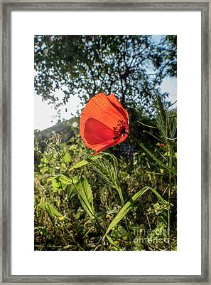 The Big Red Framed Print