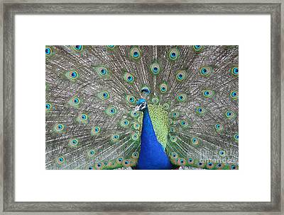 The Big Show Framed Print