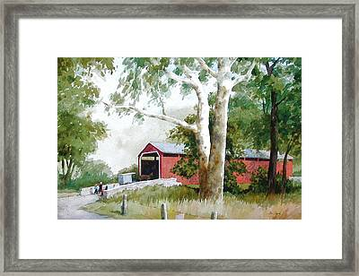 The Big Sycamores Framed Print