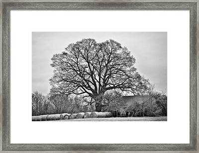 Framed Print featuring the photograph The Big Tree by Ron Dubin