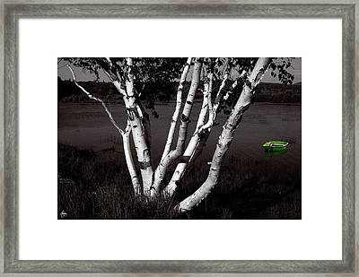 The Birch And The Green Dingy Framed Print